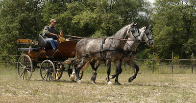 Trip by horse and carriage